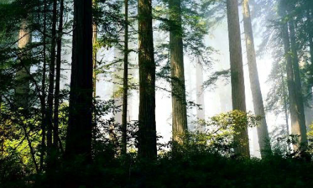 Stage survie forêt
